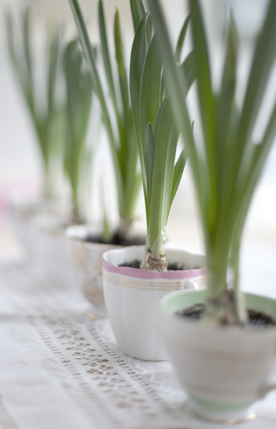 teacups planted with bulbs