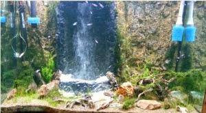 Hồ thủy sinh suối thác 1