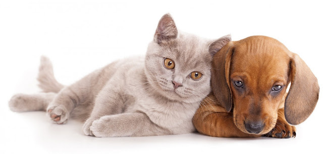 Rescue Remedy For Dogs Cats