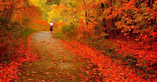 Happy Fall Wallpapers Autumn Wallpapers Nature Autumn Desktop Wallpapers