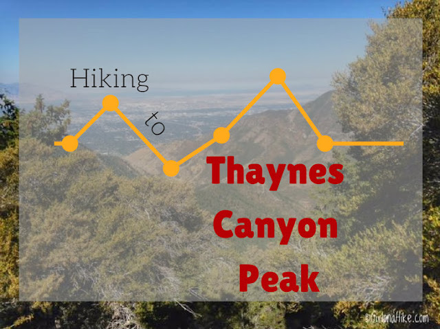 Hiking to Thaynes Canyon Peak, Hiking in Utah, Hiking in Utah with Dogs