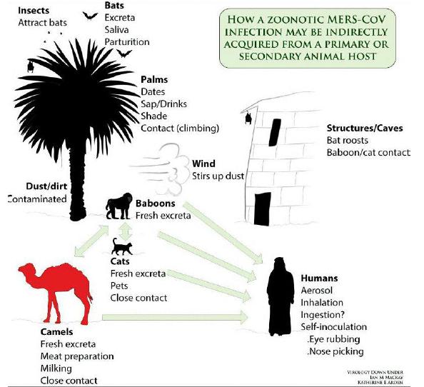 Image Result For Virus Corona Adalah