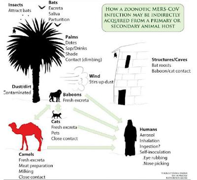 Middle East Respiratory Syndrome Corona Virus Penularan dan Pencegahan Virus MERS-CoV