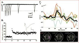 Βραχυχρονη Μακροχρονη ενισχυση συναψεων στον εγκέφαλο.