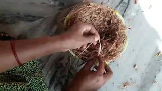 fungsi sabut kelapa