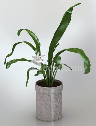 free 3d model flower