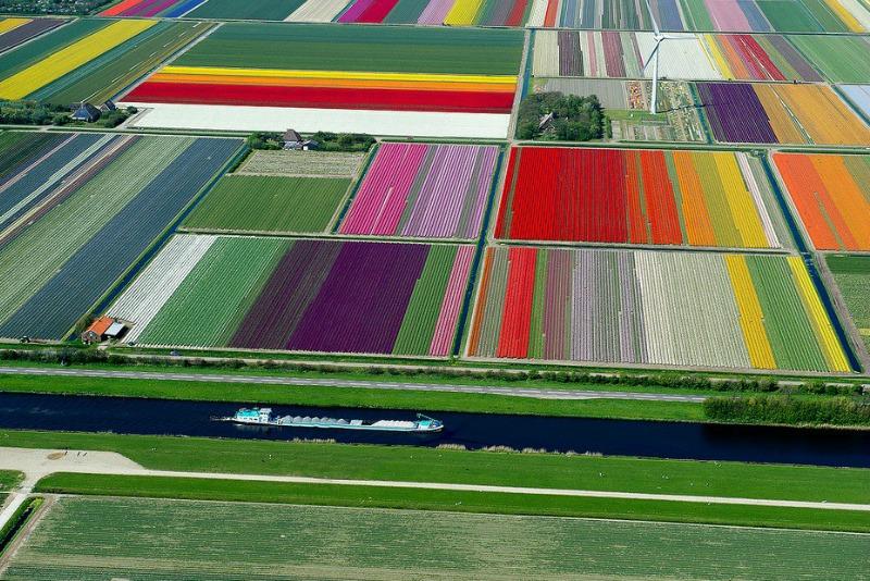 Campos florícolas en Holanda
