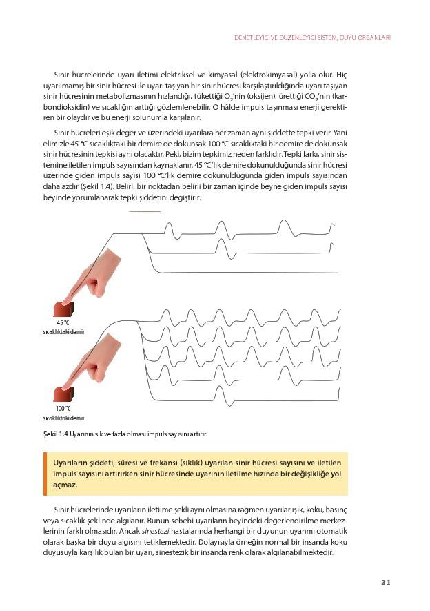 11. Sınıf Biyoloji Ders Kitabı Cevapları Köke Yayınları Sayfa 21
