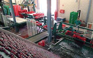 La Agrupación de Cooperativas del Valle del Jerte abre sus puertas