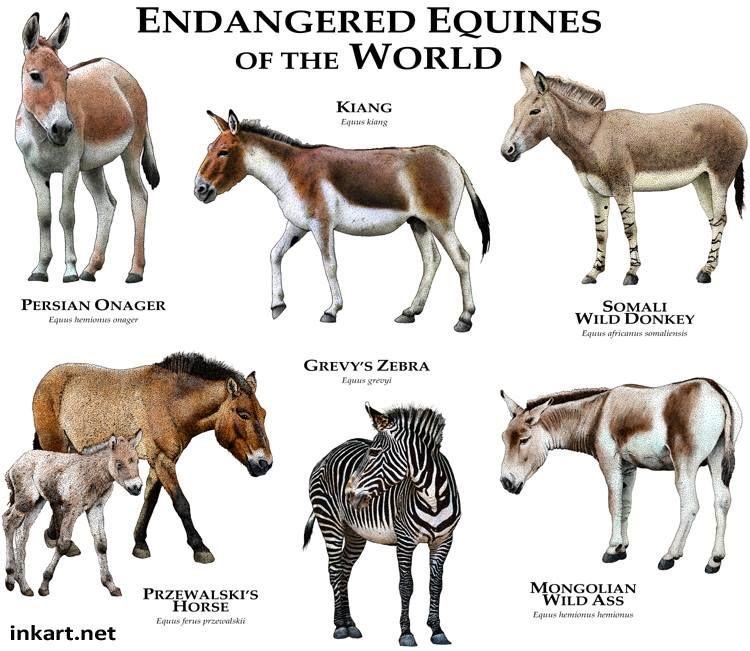 Equinos Ameaçados de Extinção no Mundo