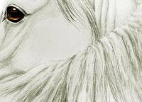 horse gifts, equestrian artworks, arabian horse drawings