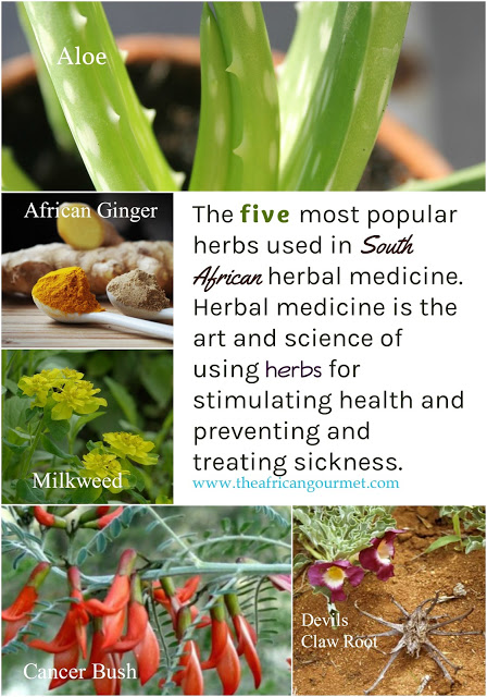 The five most popular herbs used for centuries in South African indigenous healing medicine are aloe, African ginger, milkweed, cancer bush and devils claw root.