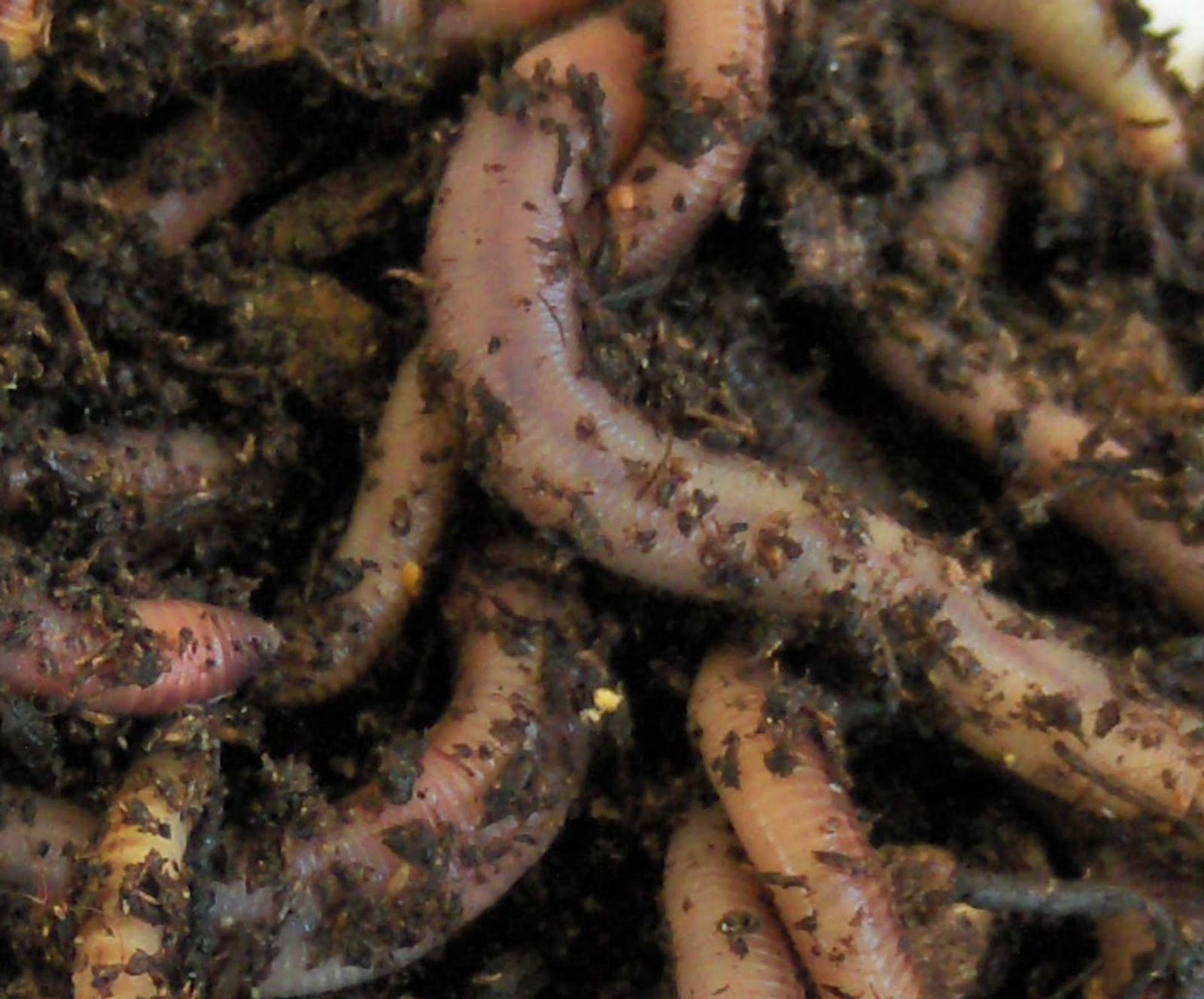 Do's and Don'ts of Worm Feeding