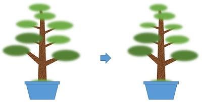 直幹樹形の剪定の前と後の比較