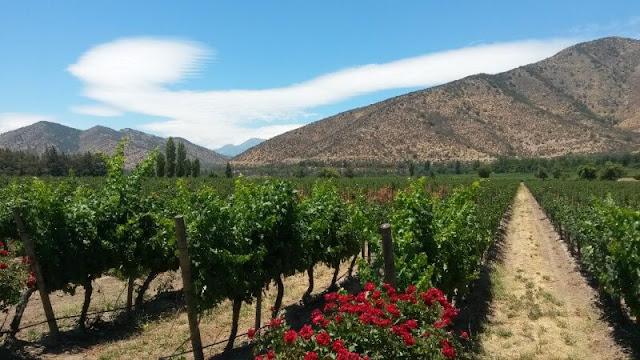 Visitar as vinícolas em Santiago no mês de dezembro