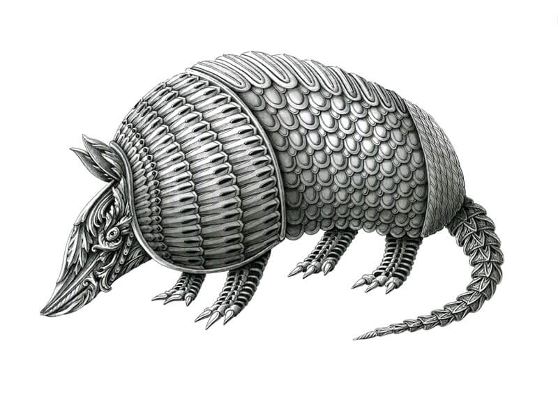 11-Armadillo-Alex-Konahin-Super-Detailed-Ink-Animal-Drawings-www-designstack-co