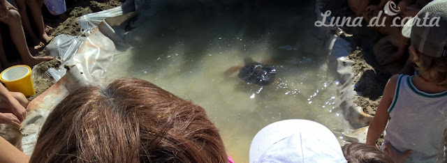 studiare le tartarughe bambini