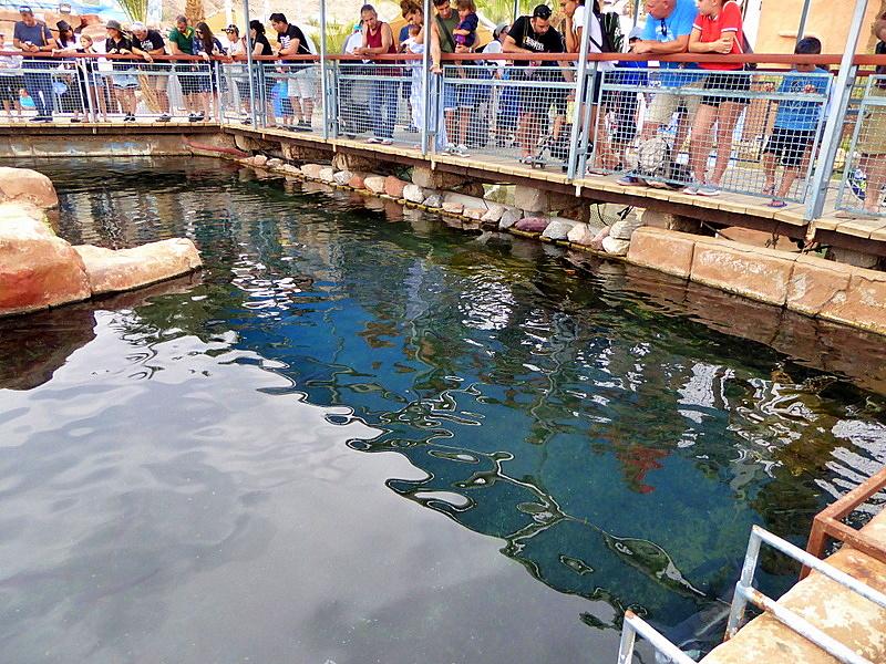 Подводное царство Красного моря
