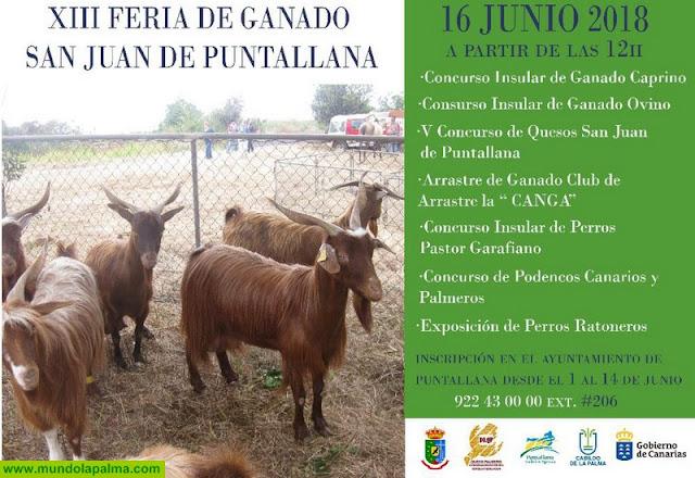 XIII  Feria  de  Ganado  de  San  Juan  de  Puntallana