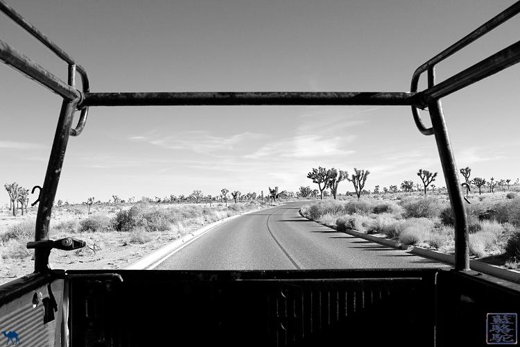Le Chameau Bleu - Roadtrip dans le desert de la Californie du sud USA
