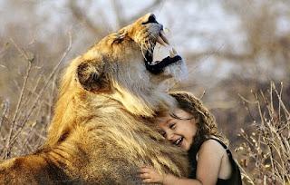 Singa deru afrika