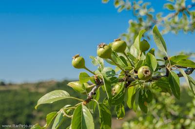 Medicinal plants in Mariovo region