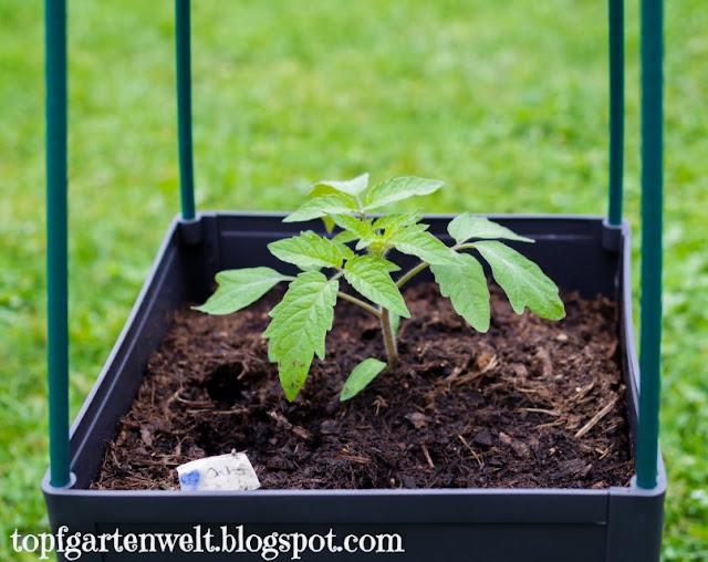 Tomaten Pflanztopf | Wasserspeicher | Balkon | Terrasse | Rankturm - Gartenblog Topfgartenwelt