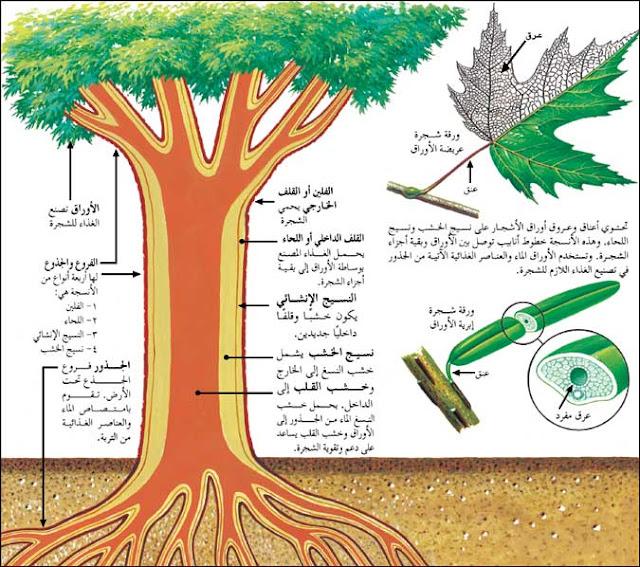 Bahasa Arab Bagian Tanaman