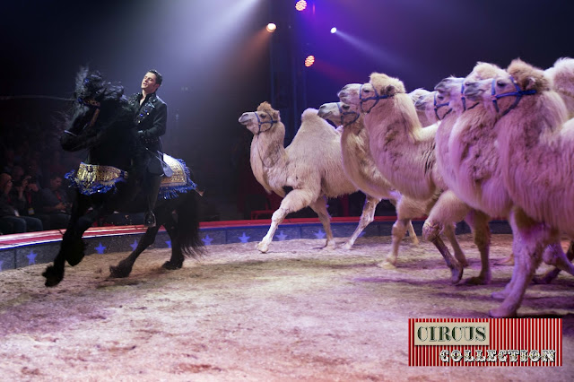 Spectacle, chevaux, chameaux, Maycol Errani