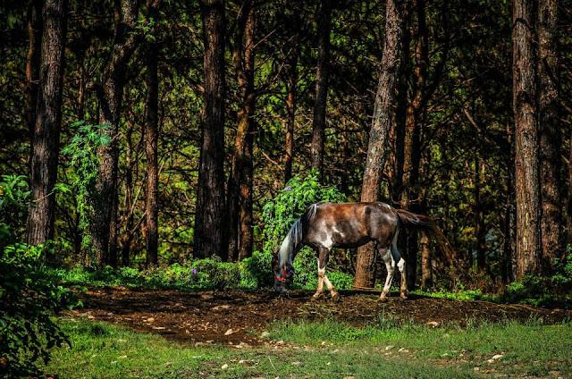 Equine Grazing Baguio City Philippines