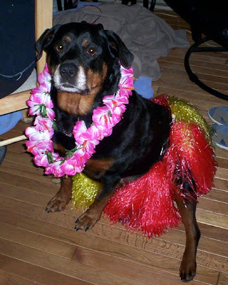 hula dog costume - turtlesandtails.blogspot.com