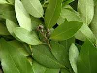 Bay Leaves are used in spaces and many home remedies.