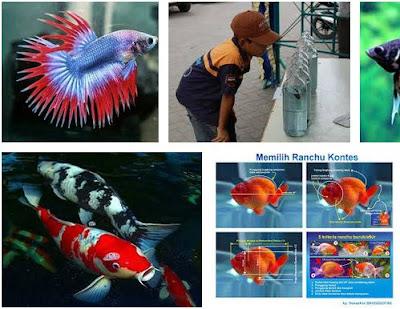 Cara Memilih Ikan Hias yang Baik