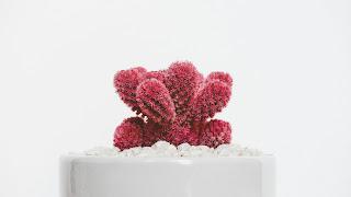 Dasar-dasar desain grafis tekstur atau texture cactus