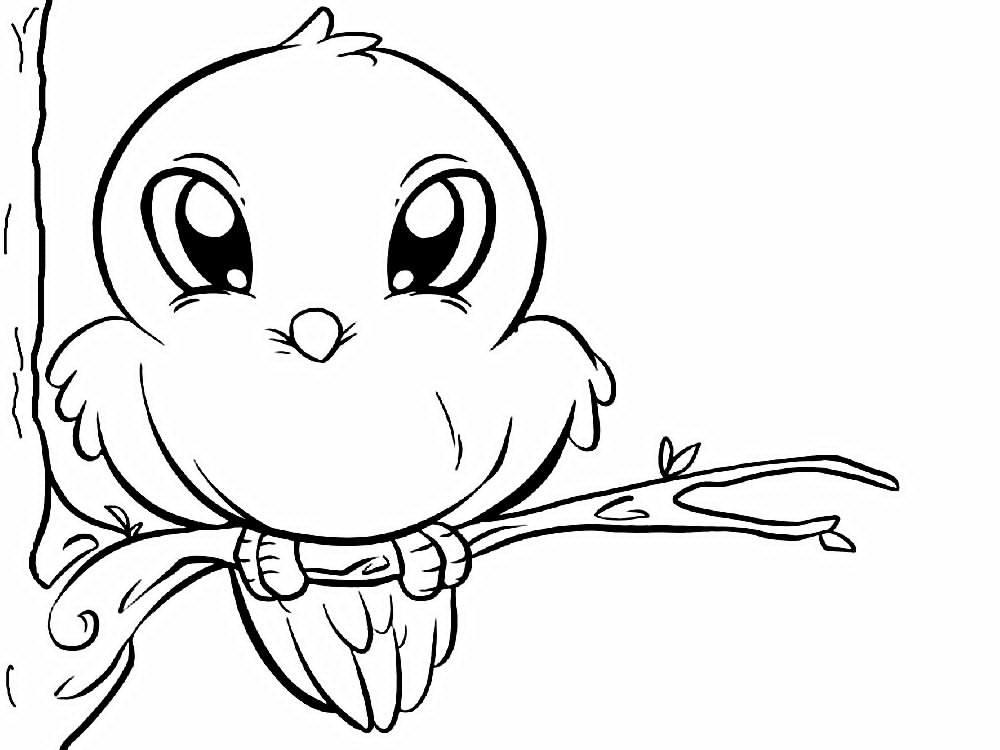 El vencejo Félix vuela: Leyenda de los árboles de hoja perenne