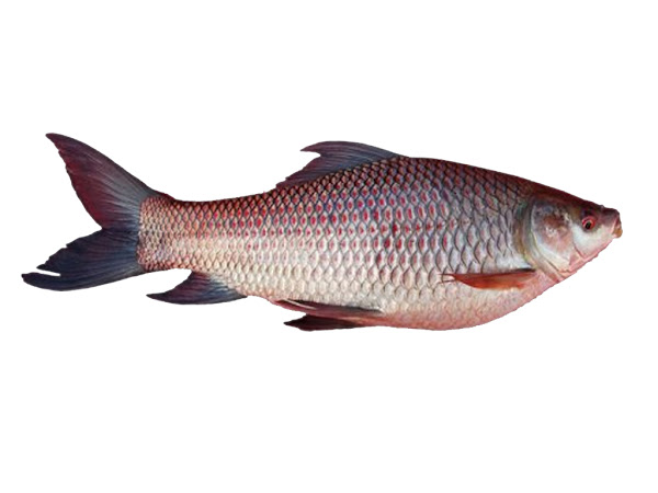 Fish Farming Modern Farming Methods