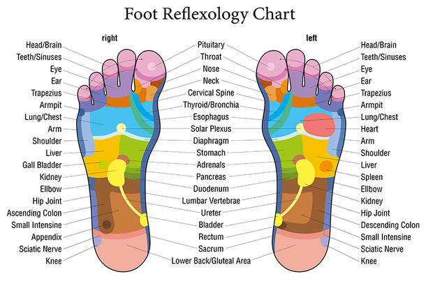 Reflexology orgasm