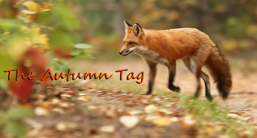 Autumn Fox*