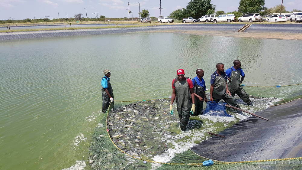 Inland fisheries and aquaculture namibia offices farms for Fish farm 3