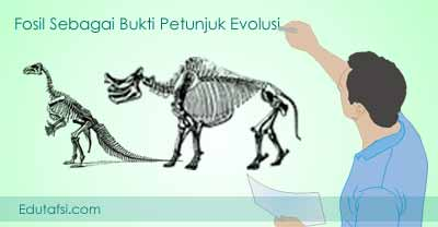 bukti-bukti petunjuk evolusi