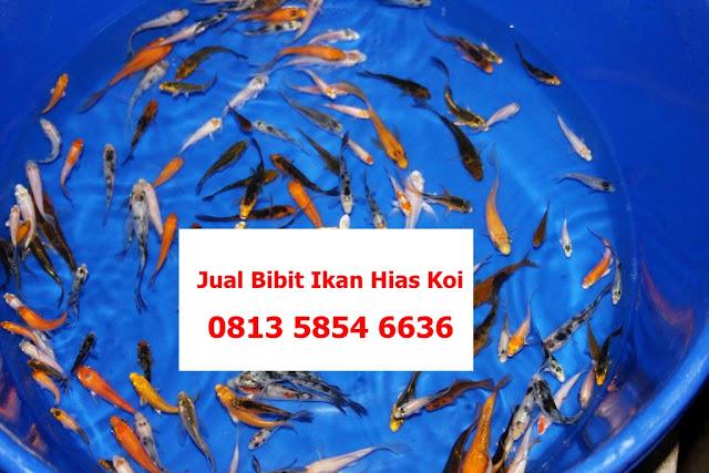 Pengepul Ikan Gurame Di Tegal Pengepul Ikan Gurame