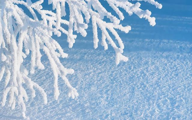 Foto winter achtergrond met sneeuw