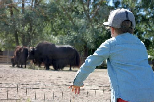 tallinna lapset lapsiperhe perheloma eläintarha zoo