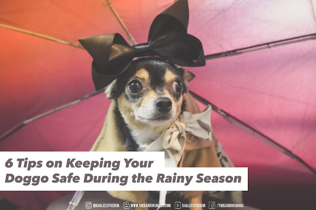 6 Tips on Keeping Your Doggo Safe During the Rainy Season (and Flooding!)