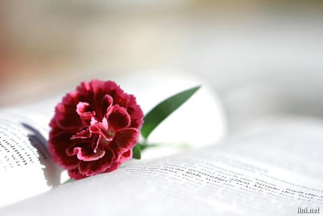 ảnh hoa và sách