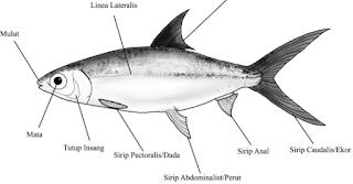 Budidaya Lengkap Ikan Bandeng
