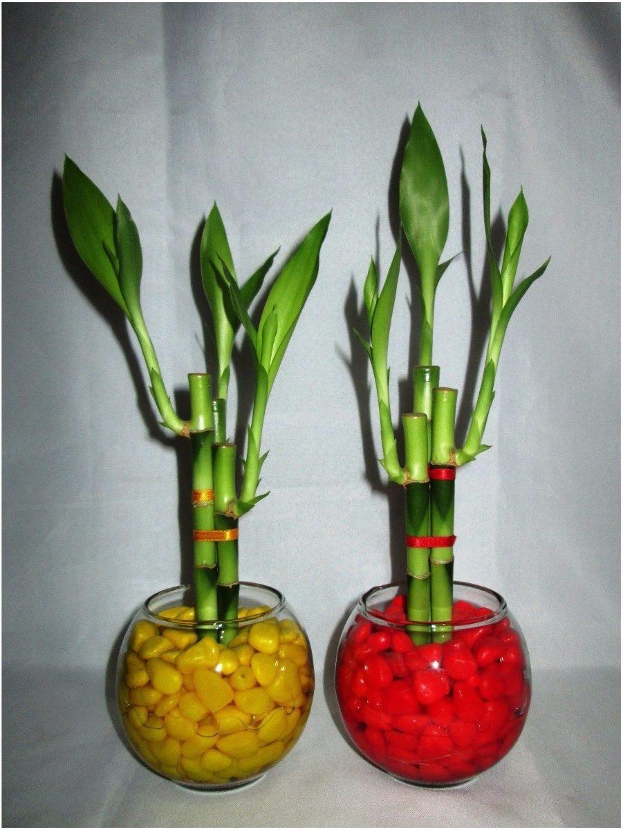 Cactus y suculentas planta ornamental for 6 plantas ornamentales