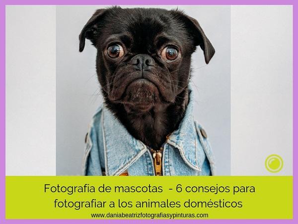 Guía-de-fotografía-de-mascotas-ideas-y-consejos esenciales para hacer-mejores-fotos-a-tu-perro-o-gato