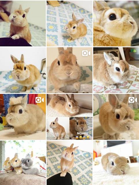 instagram de coelho