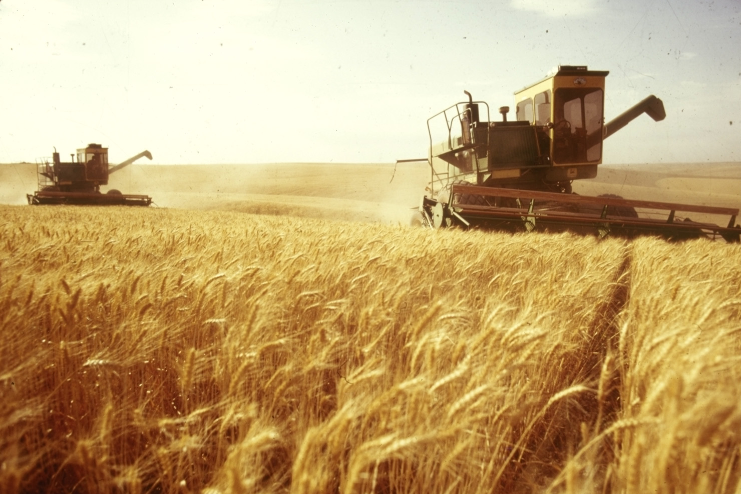 Wheat:Food Industry News